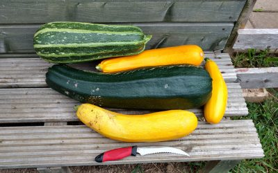 The Marrow Harvest